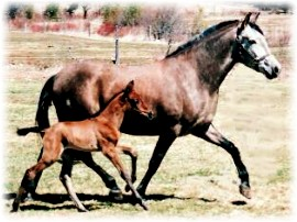 Delia and 2006 filly Andalusian Mare