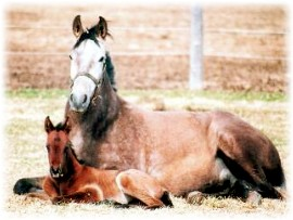 Delia and 2006 filly