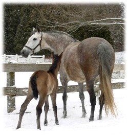 Delia and 2008 filly - Andalusian Mare Breeding