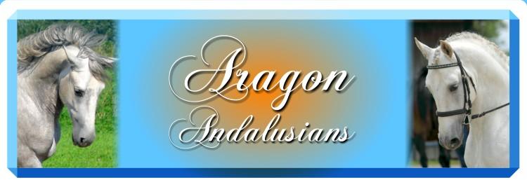 Aragon Andalusians